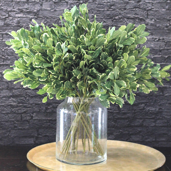 artificial flowers luxury faux silk green pittosporum leaf lifelike realistic faux flowers buy online from Amaranthine Blooms UK