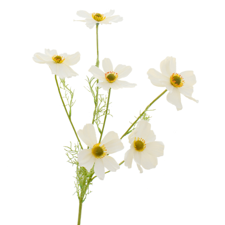 artificial flowers luxury faux silk white cosmos lifelike realistic faux flowers buy online from Amaranthine Blooms Hong Kong UK