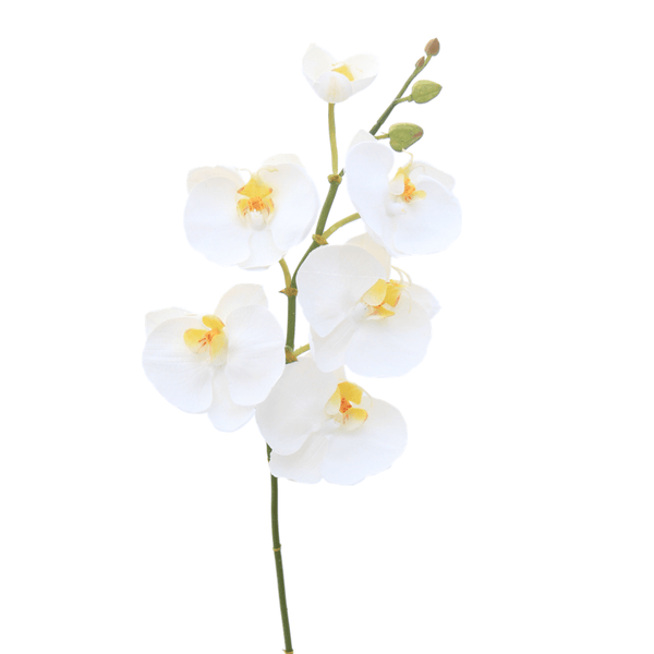 Artificial flowers luxury faux silk white phalaenopsis orchid stem short lifelike realistic faux flowers buy online from Amaranthine Blooms UK