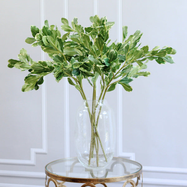 luxury artificial fake silk flowers green pittosporum leaf lifelike realistic faux flowers buy online from Amaranthine Blooms  UK