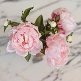 pale pink classic peony - bunch of 6 stems