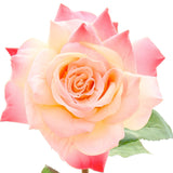 luxury artificial fake silk flowers pink open hybrid tea rose lifelike realistic faux flowers buy online from Amaranthine Blooms UK