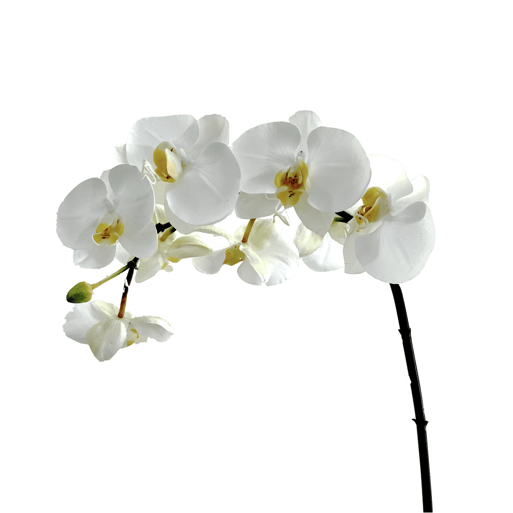 Popular luxury artificial white orchid | Amaranthine Blooms GL52