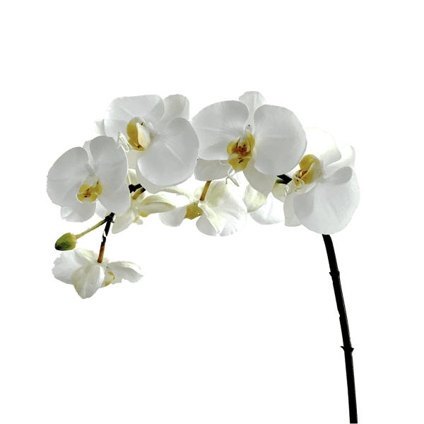 luxury artificial fake silk flowers white orcihd stem large flowers lifelike realistic faux flowers buy online from Amaranthine Blooms Hong Kong UK
