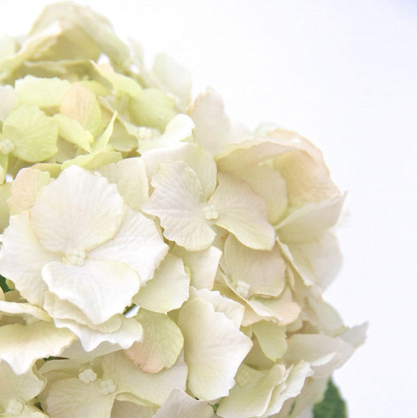 this luxury lifelike and realistic artificial cream lacecap hydrangea - tall silk flower is available from Amaranthine Blooms in Hong Kong and UK