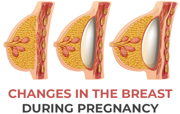 Changes the breast during pregnancy