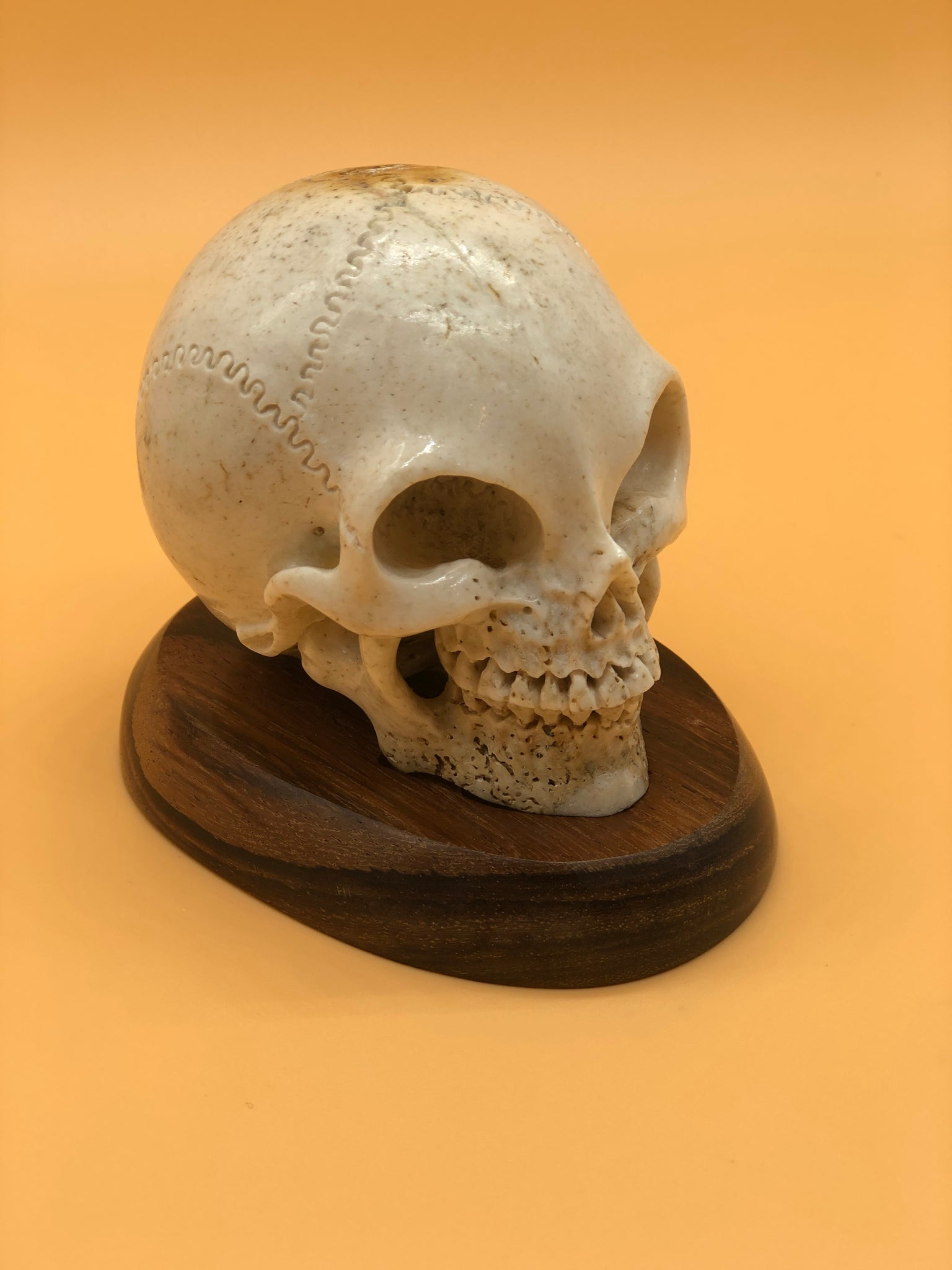 Fossil Bone Skull Carving