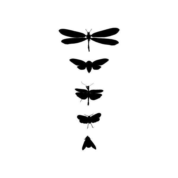 Bug Study Tattoos