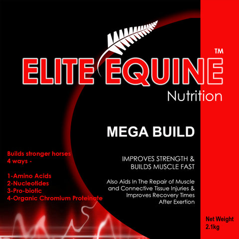 Elite Equine Mega Build
