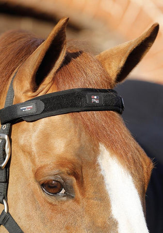 Premier Equine Magni-Teque Magnetic Browband PEI