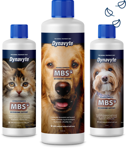 Dynavyte MBS for Dogs