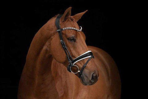 PS of Sweden Bridle GP