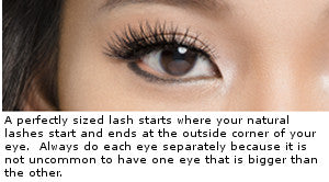 An example of a perfectly sized lash