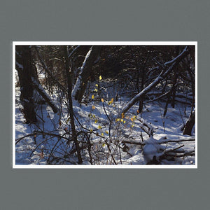 Autumn Holdout 9 x 6 Photographic Print  Square- Andrew Moor Photography