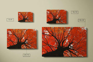Autumn Maple Canvas Compare - Andrew Moor Photography