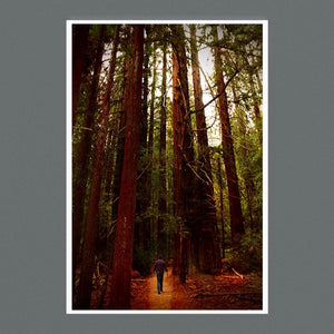 Avenue of the Giants 9x6 Square - Andrew Moor Photography