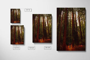 Avenue of the Giants - Canvas Compare - Andrew Moor Photgography