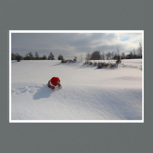 Bear on Snow 9x6 Square - Andrew Moor Photography