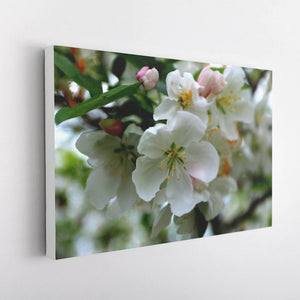 Cherry Blossoms Canvas - White Edges - Andrew Moor Photography