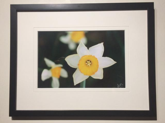 Daffodil - Framed - Andrew Moor Photography