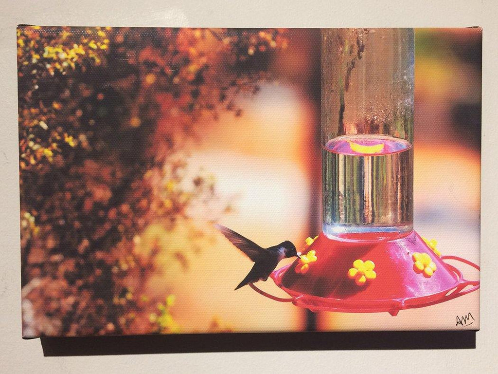 Hummingbird Signed Canvas Print - Andrew Moor Photography