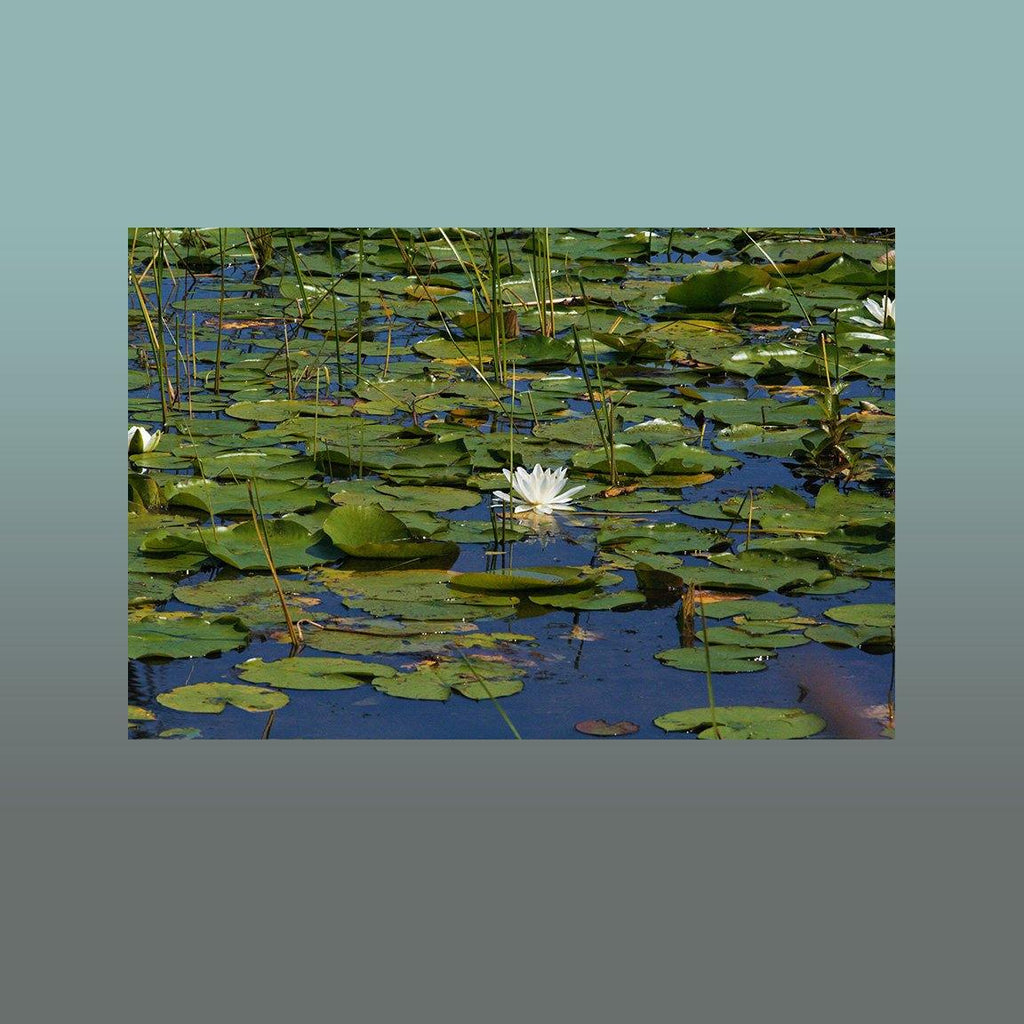 Lily Pond Image - Andrew Moor Photography