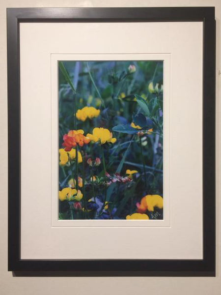 Meadow Flowers - framed - Andrew Moor Photography