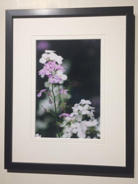 Meadow Asters - framed - Andrew Moor Photography