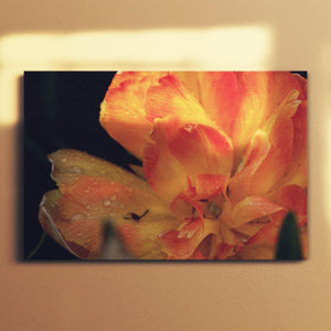 Orange Tulip Canvas Square - Andrew Moor Photography