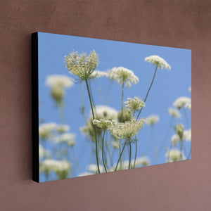 Queen Anne's Lace Canvas - Black Edges - Andrew Moor Photography