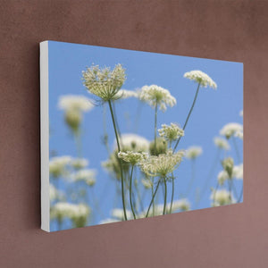 Queen Anne's Lace Canvas - White Edges - Andrew Moor Photography