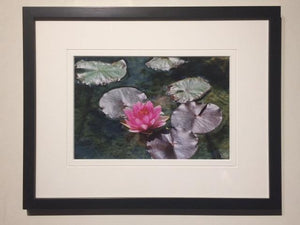 Solo Pink Water Lily - framed - Andrew Moor Photography