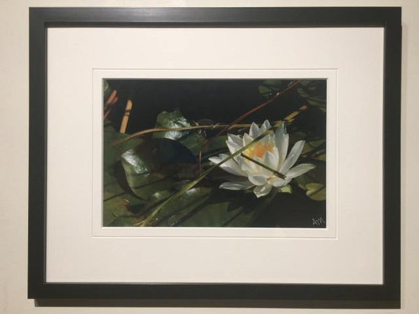 Solo White Water Lily - framed - Andrew Moor Photography