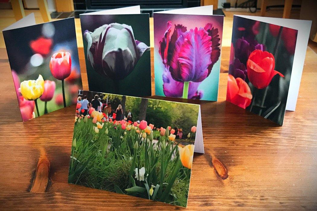 Tulip Card Collection - Andrew Moor Photography