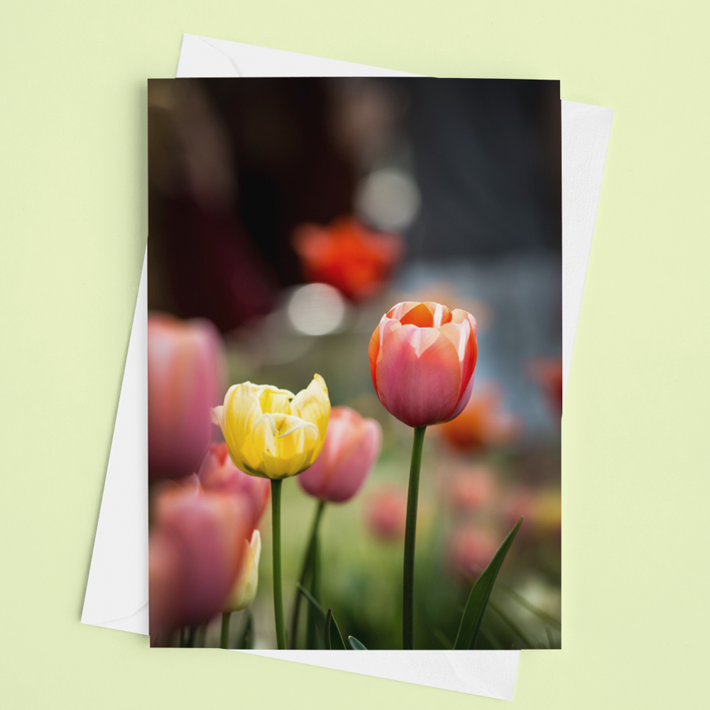 Tulip Time Card - Andrew Moor Photography