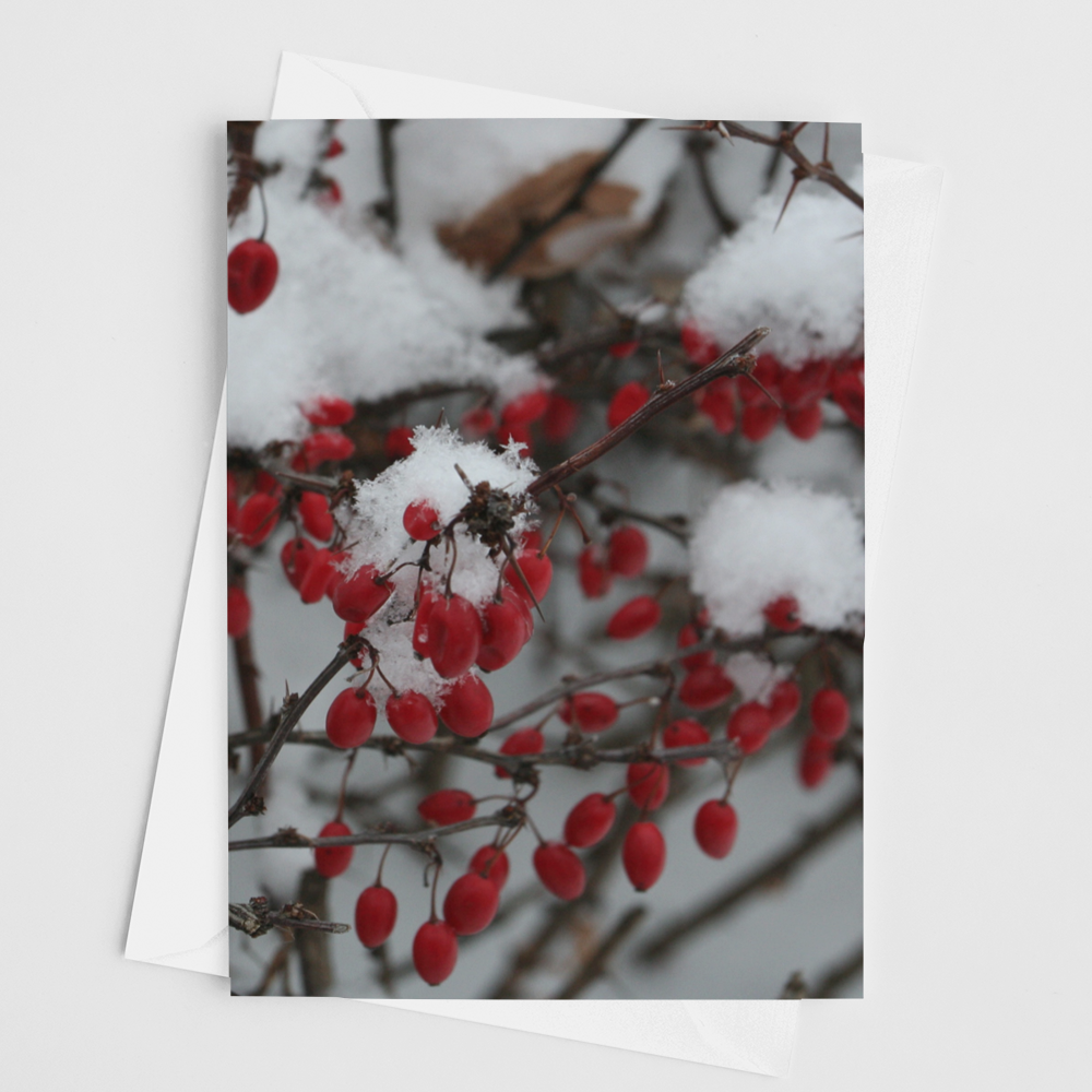 Winter Berries Card - Andrew Moor Photography