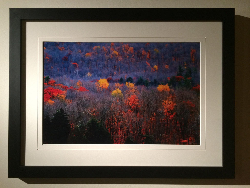 Fall Colors -signed and framed print - Andrew Moor Photography