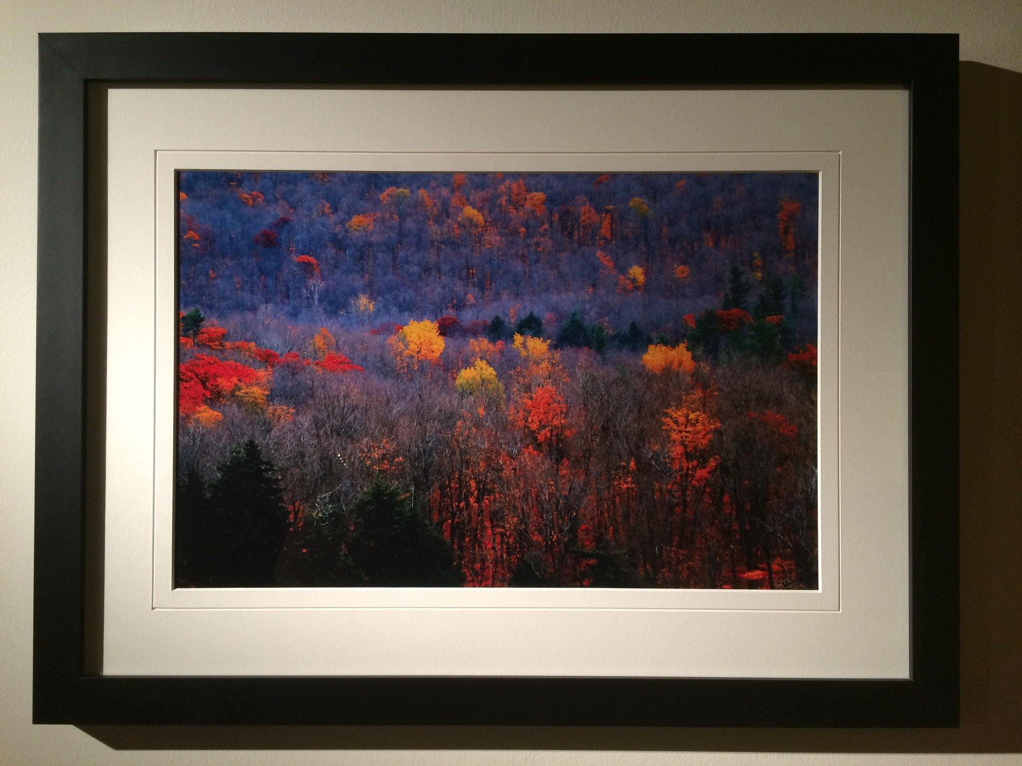 Fall Colors - Framed Print - Andrew Moor Photography