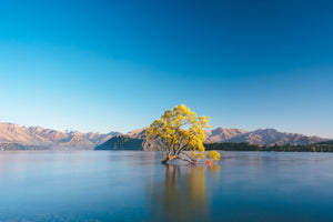 100 x 65cm Large Landscape Canvas Prints - Wanaka Tree, New Zealand