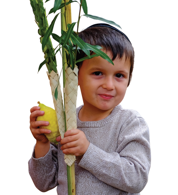 Lulav & Etrog Chinuch Set - please see Ts and Cs - Lulav & Etrog - Sukkahmart South Africa