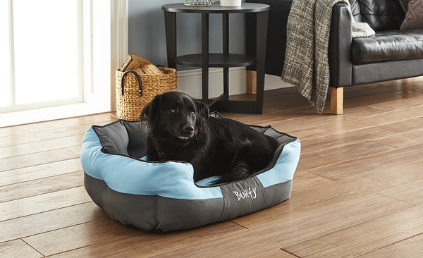 How To Buy A Dog Bed