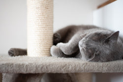 How to stop cats from scratching furniture and carpets