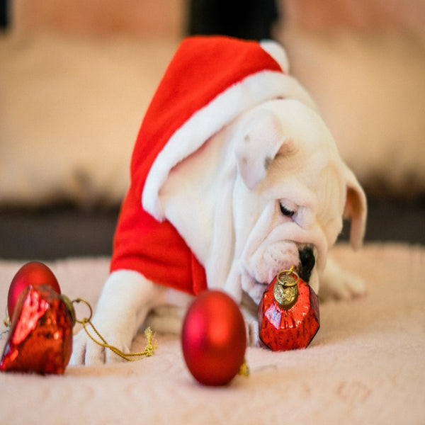 Fantastic Christmas Present Ideas For Your Dog