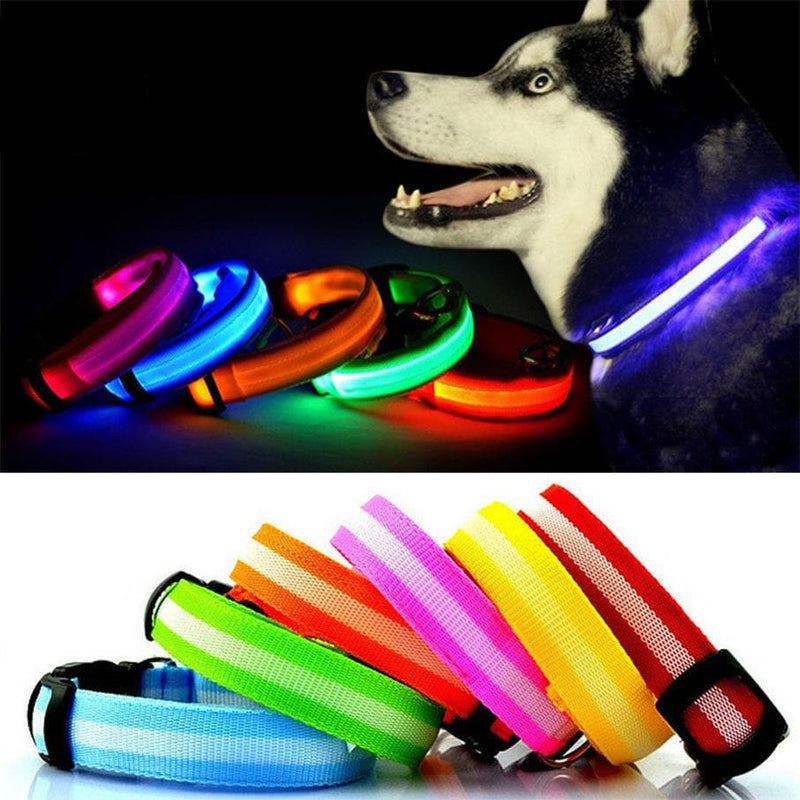 Bunty LED Dog Collar