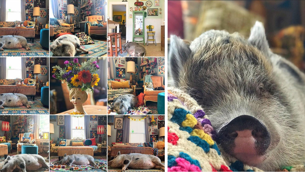 House Tour: Ryann's pig called Norma Jean