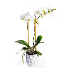 Load image into Gallery viewer, Custom Orchid Plant Design