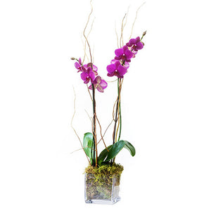 Monthly Orchid Plant Subscription