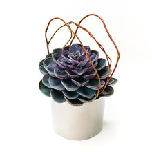 Load image into Gallery viewer, Custom Succulent Plant Design