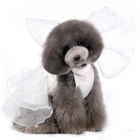 Online Pet Store Clothing Cute Dog Fashion Wedding Dress Costume
