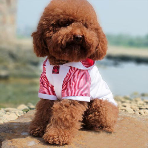 Striped Hoodie Shirt Jacket for Pet Clothes & Fashion Dog Style